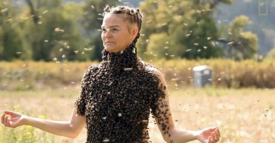 bee swarm lady